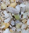 Succulentum1207cocolog