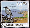 Galapagosmockingbird