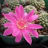 Violaciflora1403cocolog