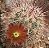 Erussanthus1404cocolog