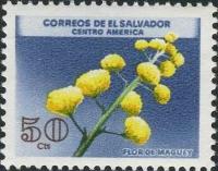 Aelsalvadormaguay