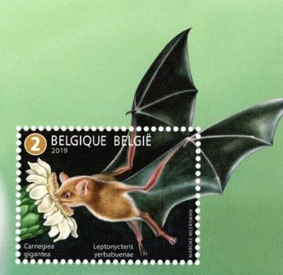 Belgium2019carnegieagigantea