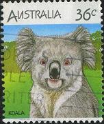 173 Koala