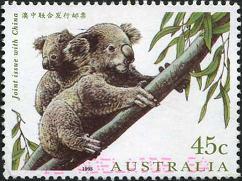 181 Koala