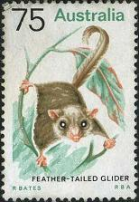 130 Feather-tailed glider