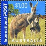 225 Kangaroo