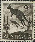 204 Kangaroo