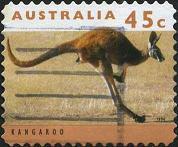 218 Kangaroo
