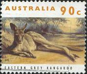 221 Eastern gray kangaroo