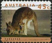 219 Kangaroo