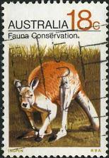 206 Kangaroo