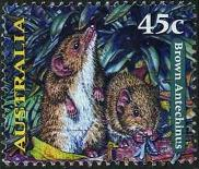 111 Brown antechinus