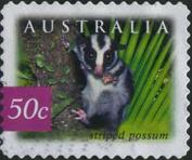 146 Striped possum