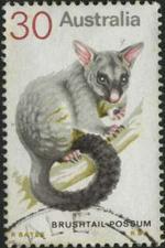 140 Brushtail possum