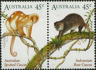 120 Australia spotted cuscus