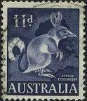 110 Rabbit bandicoot