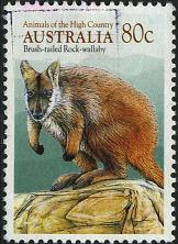 191 Brush-tailed rock-wallaby