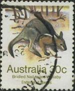 190 Bridled nail-tailed wallaby