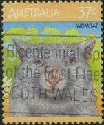 162 Wombat