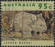 163 Common wombat