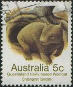 161 Queensland hairy-nosed wombat