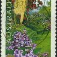 Banksia integrifolia var integrifolia