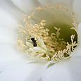 蜂と短毛丸