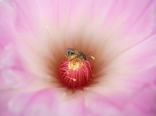 蜂と象牙丸