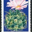 Gymnocalycium monvillei 1974