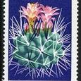 Neoporteria rapifera 1974