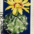 Hamatocactus setispinus 1970