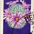 Mammillaria boolii 1970