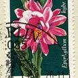 Epiphyllum hybri 1970.