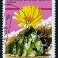 Astrophytum capricorne 1996