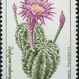 Echinopsis multiplex 1994