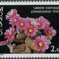 Echinocereus fitchii 1981