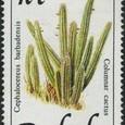Cephalocereus barbadensis 1989