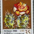 Opuntia bispinosa 1980
