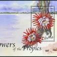 Selenicereus grandiflorus 2004