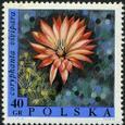 Coryphantha vivipara 1968