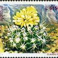 Echinofossulocactus albatus 1997