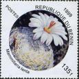 Mammillaria lenta 1999