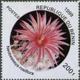 Neobesseya rosiflora 1999