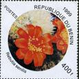 Rebutia senilis 1999