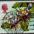 Cereus 1970