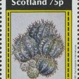 Cactus-Bernera Islands 1981