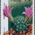 Mammillaria boolii 2001