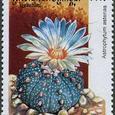 Astrophytum asterias 2001