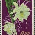 Epiphyllum oxypetalum 1964