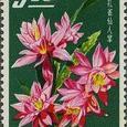 Epiphyllum 1964